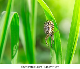 on a green grass spider creeps white in the rays of sunlight