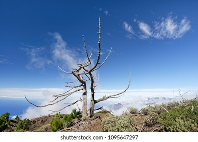 On a high ridge stands a picturesque dried up tree, above blue sky with few striking white clouds, view of the sea - Location: Spain, Canary Islands, La Palma