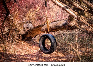On a hike, I discovered this tire swing someone had set up out in the middle of nowhere in the woods. Perhaps some children camped there once.