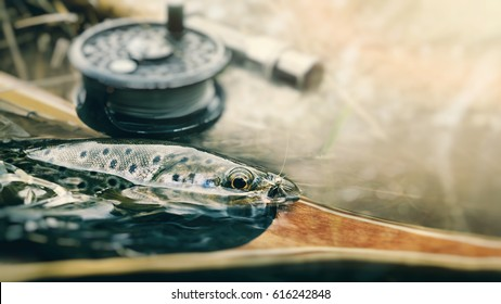 On hook. Fly fishing.