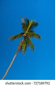 on Idyllic Island Palm Overhead