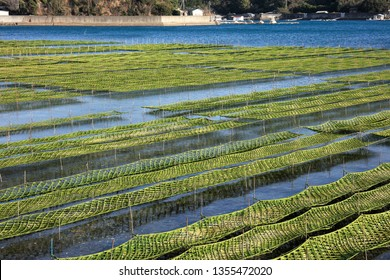 On Japan, sticks used in the cultivation of laver, called 'norisoda'