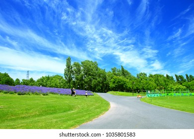 """On July 25, 2016, Sapporo, Japan, Hokkaido, """"sapporo-satoland"""" is a citizen's relaxing facility that pleases lavender in full bloom of rural scenery."""