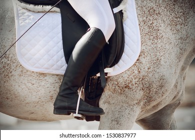 On a light horse with a spotted color sits a rider in black boots. The horse is wearing horse gear - saddle, a white saddle cloth and stirrup.