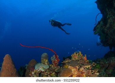 On the north wall, scuba divers enjoy the relaxing blue water of Grand Cayman in the Caribbean. The underwater paradise is populated with fish and coral. The sun breaks through the crystal clear water