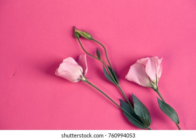 on a pink background two flowers.