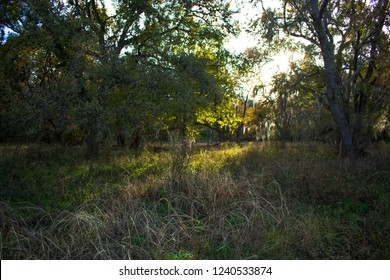On the Purgatory Creek Trail in San Marcos, TX