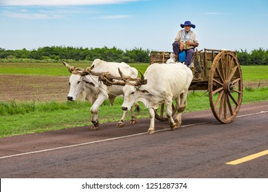 On the road from Encarnacion to Villarrica, Paraguay - November 17, 2018: A local Paraguayan transports sugarcane with his ox cart.