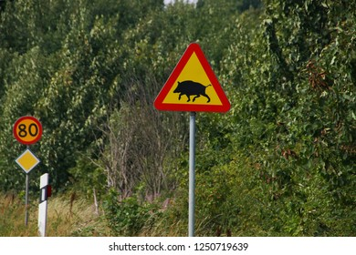 On the road in south sweden, Wild Boar warning Sign
