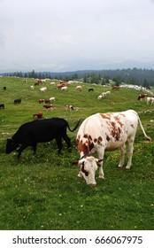 On the slopes of Mont Tendre - Switzerland