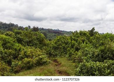 On the slopes of Mount Aberdar. Kenya, Africa