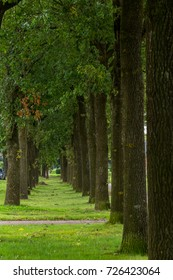 On some roads are lined with shady trees flanking the path way.