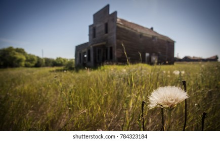 On Stalk Of Dandelion Fluff In Focus Front A Blurred Large Old Abandoned Store