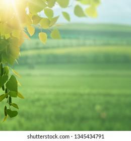 On the summer meadow, seasonal environment