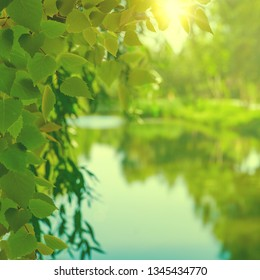 On the summer river, abstract seasonal backgrounds with foliage, river and bright sun