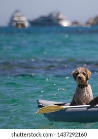On a sunny clear day, A dog facing the camera is sitting in an inflatable grey canoe on the blue turquoise sea in the south of france. Blurred boats in the Background. Summer holidays activities.
