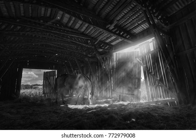 On a sunny day, the horse went into the old dark barn and stood under the rays of the inward sunlight.