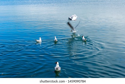 On the surface of Qinghai Lake in Northwest China, many waterbirds and wild ducks play on it.