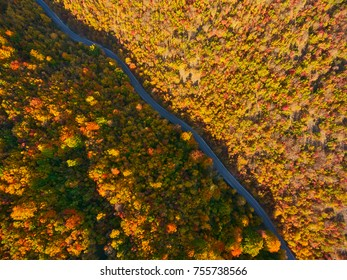 On top of the beautiful forest in autumn. Jasen national park - Macedonia. Aerial photography.
