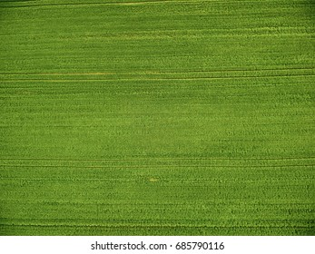 On the top of green wheat field; Drone photography