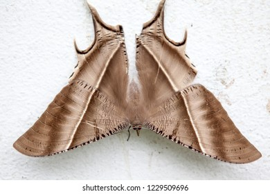 on a wall of a building there is a very beautiful Tropical Swallowtail Moth at the bottom
