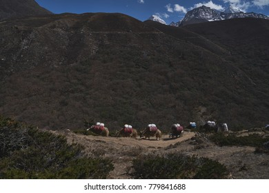 On the way to the base camp