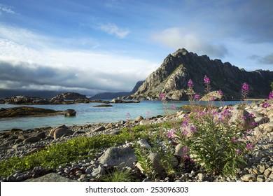On the way to Henningsvaer, Lofoten Island, Norway