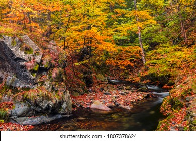 "On the way of river ""Stara Reka"" in Central Balkan natioanal park"