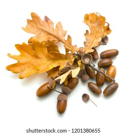 On a white background are acorns and oak leaves, October