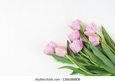 on white background a bouquet of pink tulips and free space for text