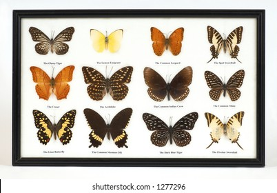 on white, butterflies