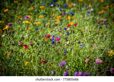 on a Wildflowers meadow