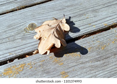 On wooden boards on a single fallen autumn leaf of oak. Autumn leaf lies on a wooden surface. The sun is shining. A cool Sunny day. Autumn, change of season. Background, backdrop.