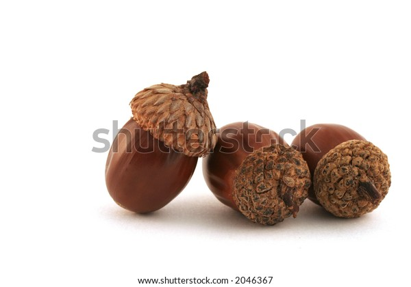 """""""Acorns� One acorn in charge, two working acorns. Soft shadow."""