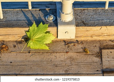 one autumn green maple leaf on wooden boards of a scaffold closeup