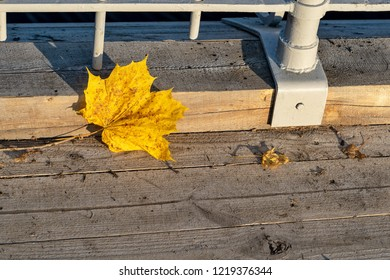 one autumn yellow maple leaf on wooden boards of a scaffold closeup