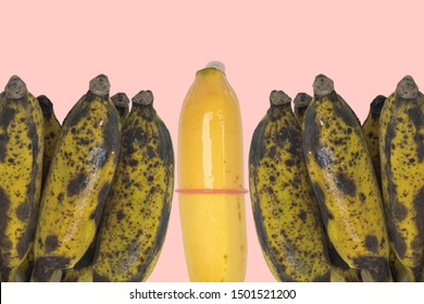 one banana with pink condom and others rotten isolated in pastel pink background. safe sex or prevention of sexually diseases concept