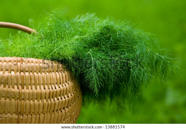 One basket with dill over blurred green background