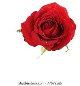 One beatiful red rose on white background