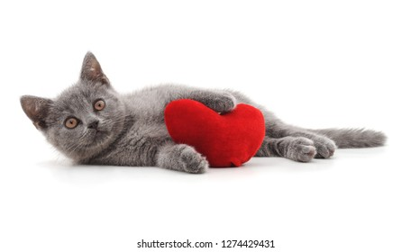 One beautiful cat with the heart isolated on a white background.