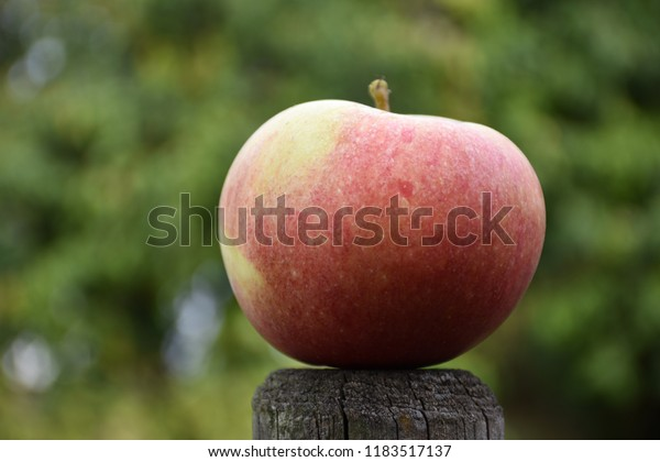 One beautiful redish apple against a blurred green background