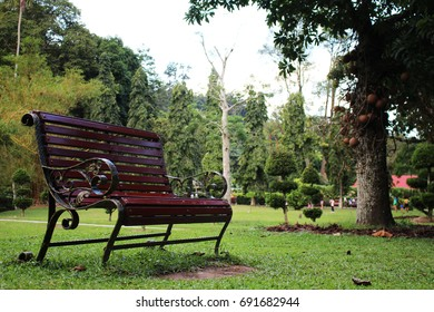 One bench with atmosphere in the evening garden.
