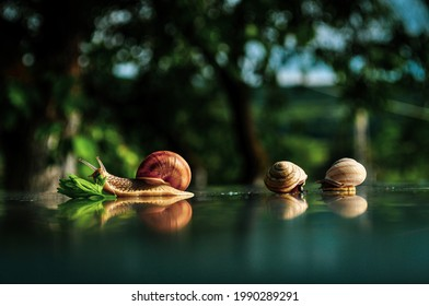 One big snail are eat the green leaf and two small snails sleeping . Snails in the natureon the table.