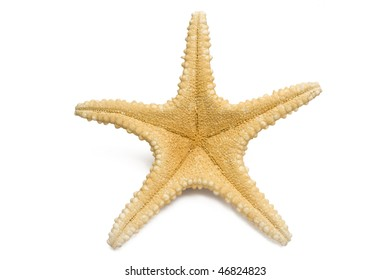 one Big starfish isolated in white background
