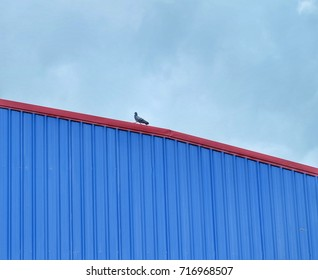 One bird on the roof of the warehouse.