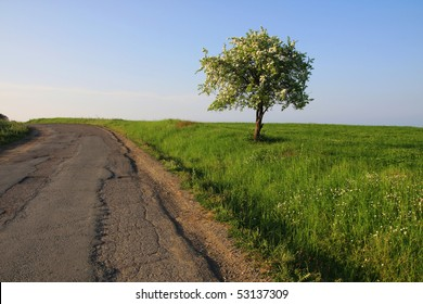 One blooming tree on the edge of the old asphalt road.