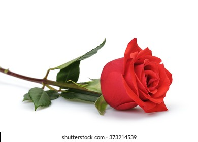 one bright red rose isolated on white