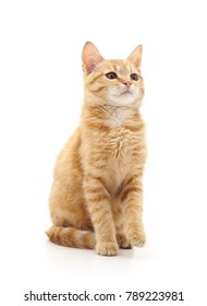 One brown kitten isolated on a white background.