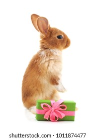 One brown rabbit with gift isolated on a white background.
