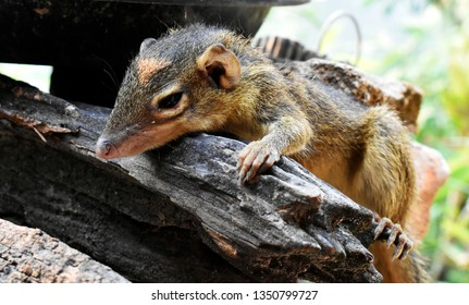 Squirrel On Log Images Stock Photos Vectors Shutterstock